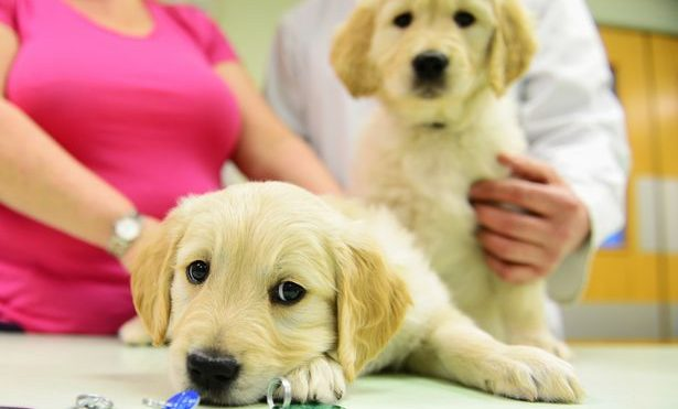 Keeping your pets safe from the dangers of asbestos